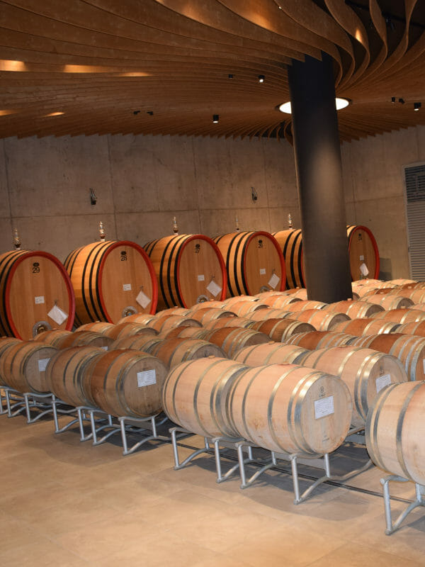 Oak big barrels and barriques in the cellar of Fortemasso winery in Barolo DOCG