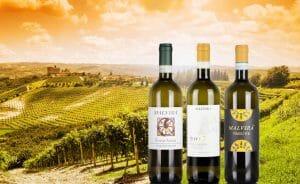 Three bottles of Roero Arneis white wine, in front of hills of Langhe, Piemonte, Italy