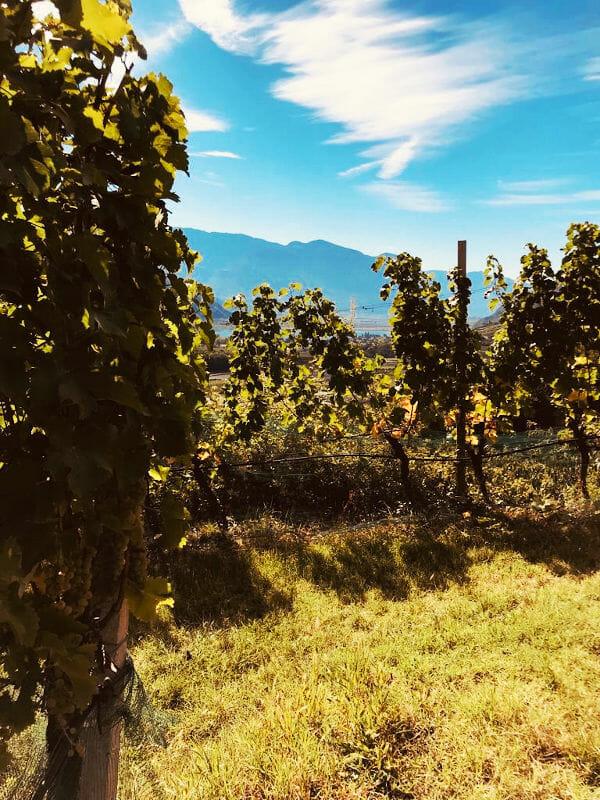Vineyards of K. Martini and Sohn in Alto Adige