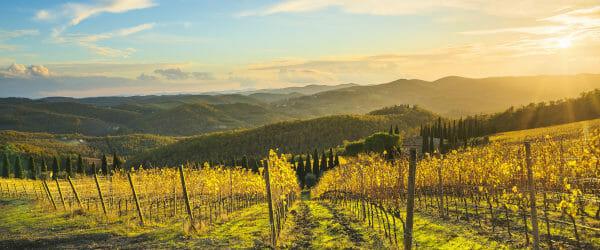 Sunset over vineyard in Radda in Chianti, Chianti Classico, Tuscany, Italy