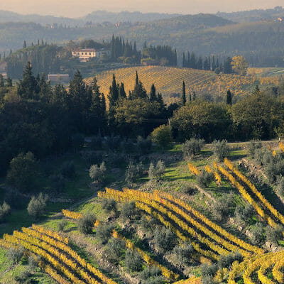 Terraced vineyard of Gagliole in Chianti Classico