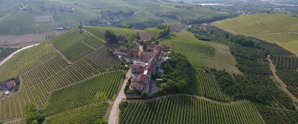 Vineyard in Barolo DOCG area surrounded by vineyards of Nebbiolo grapes