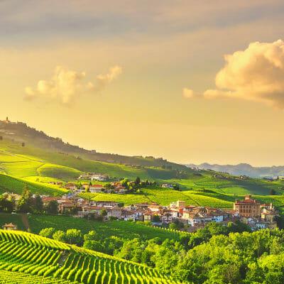 Vineyard in La Morra, Barolo DOCG area in Piedmont, Italy