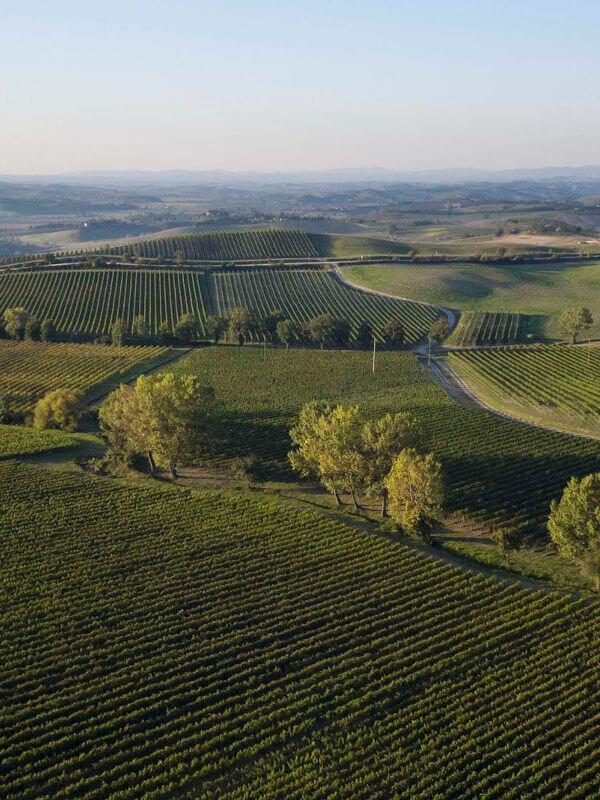 Vineyard of Ridolfi di Montalcino