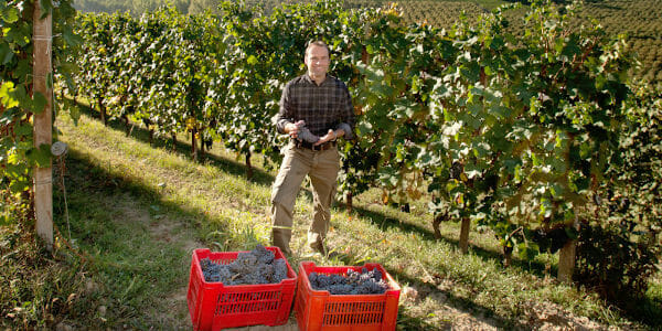 Winemaker Fabrizio Francone, holding freshly picked Nebbiolo grapes in his vineyard in Piedmont, Italy