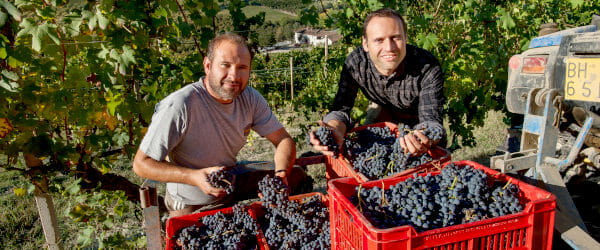 Winemaker Francone and hand picked harvest of Nebbiolo grapes in Barolo DOCG