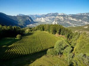 Alpine vineyard of Peter Zemmer in Alto Adige DOC