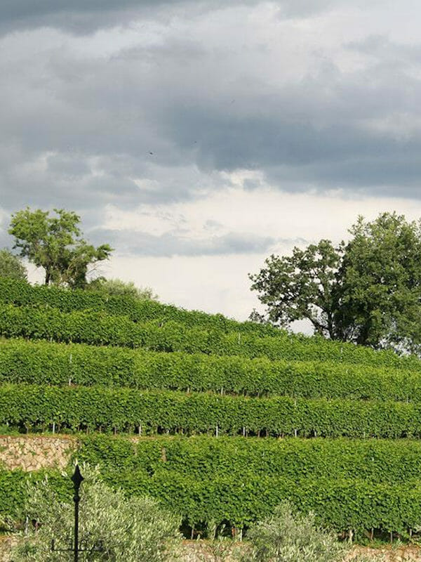 Rubinelli Vajol terraced vineyard