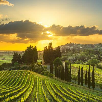 Vineyards in Tuscany, Italy