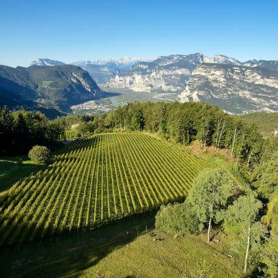 Vineyard in Alto Adige DOC, South Tyrol, Italy