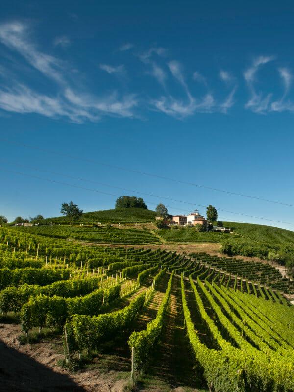 Vineyards of Malvirà on the Trinità hill in Roero