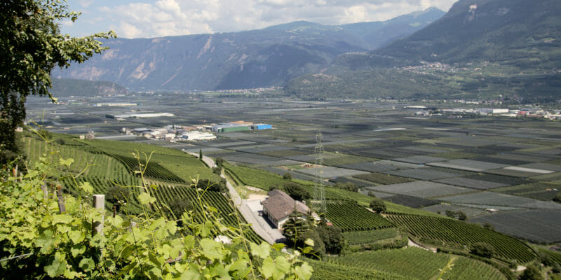 Alto Adige DOC - view on the vineyards and the valley, over Strada del vino