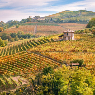 Hills with Nebbiolo and Barbera grapes, Roero DOCG winemaking area, Piedmont, Italy
