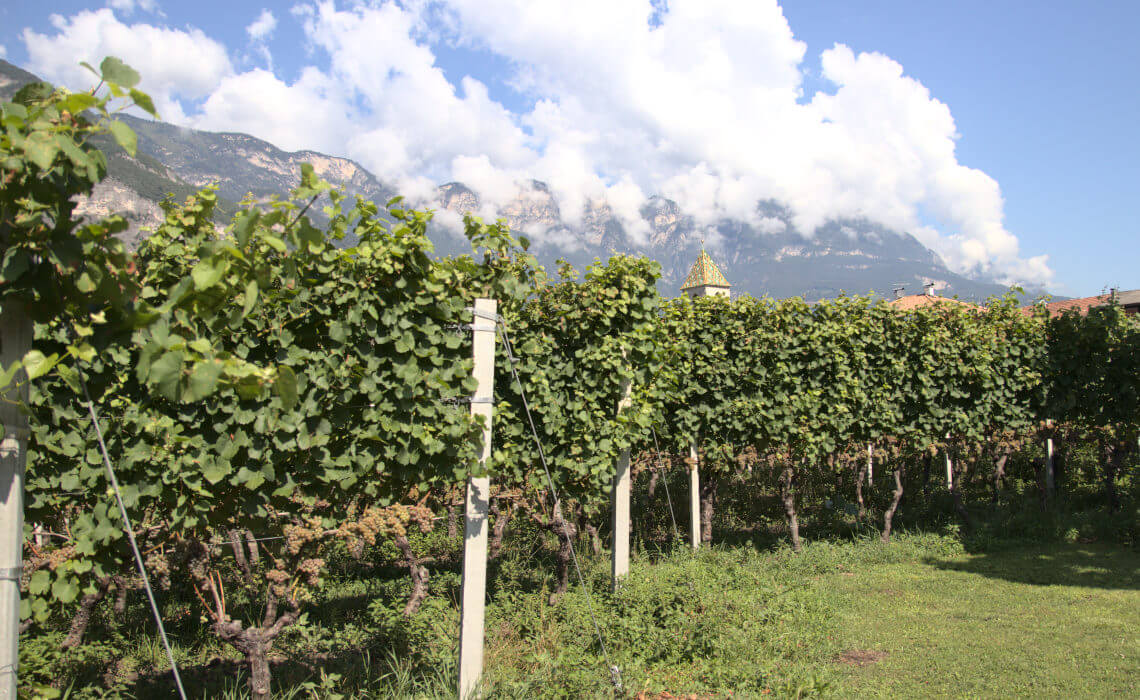 Peter Zemmer's Pinot Grigio Giatl vineyard in Alto Adige, Italy