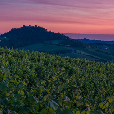 Sunset over vineyards and Montalto Pavese castle in the background in Lombardia, Italy