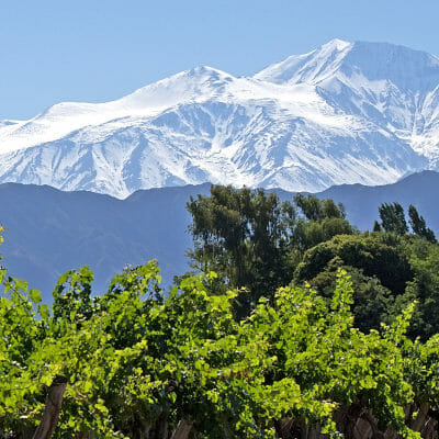 Vineyards in front of Andes mountains in Argentina