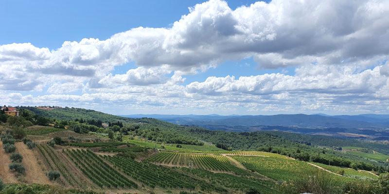 Vineyards of La Castellina in Castellina Chianti Classico DOCG