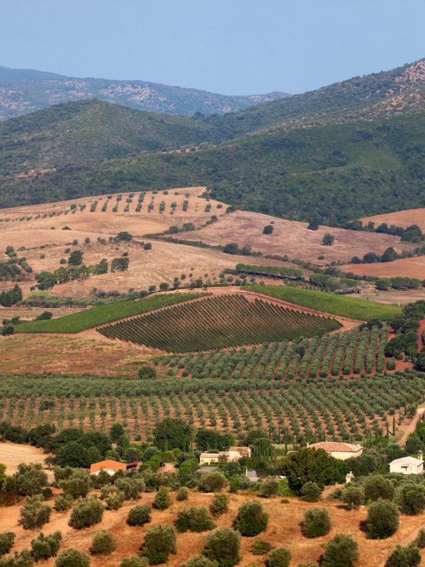 View of Vineyards of Villa Pinciana, Maremma Toscana DOC, Tuscany, Italy