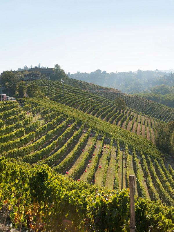 Vineyards of Francone in Neive, Barbaresco DOCG, Piedmont, Italy