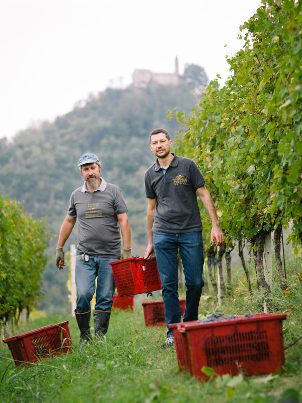 Paolo Demarie and his worker gather harvest of Nebbiolo in their vineyard in La Morra, Barolo DOCG