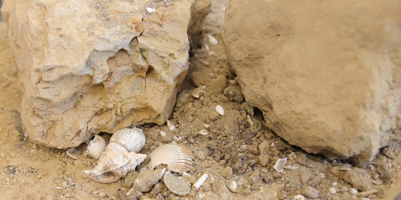 Soil with sand and light grey-brown clay, seashells and marine fossils from Vezza d'Alba in Roero with seashells