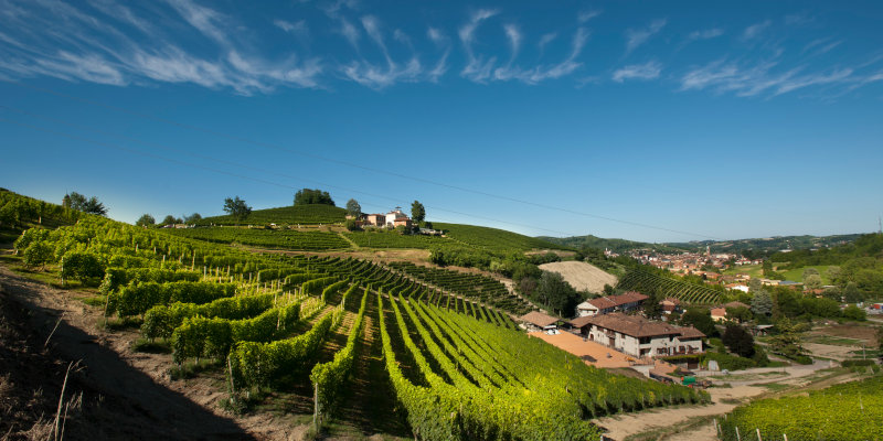Vineyards of Malvirà on the Trinità hill in Roero, Piedmont