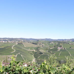 View from the Castelletto cru vineyard, ForteMasso winery, Monforte d'Alba, Barolo