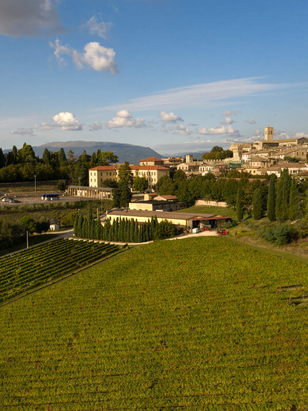 The Fratelli Pardi winery, Montefalco Sagrantino DOCG in the town of Montefalco, Umbria