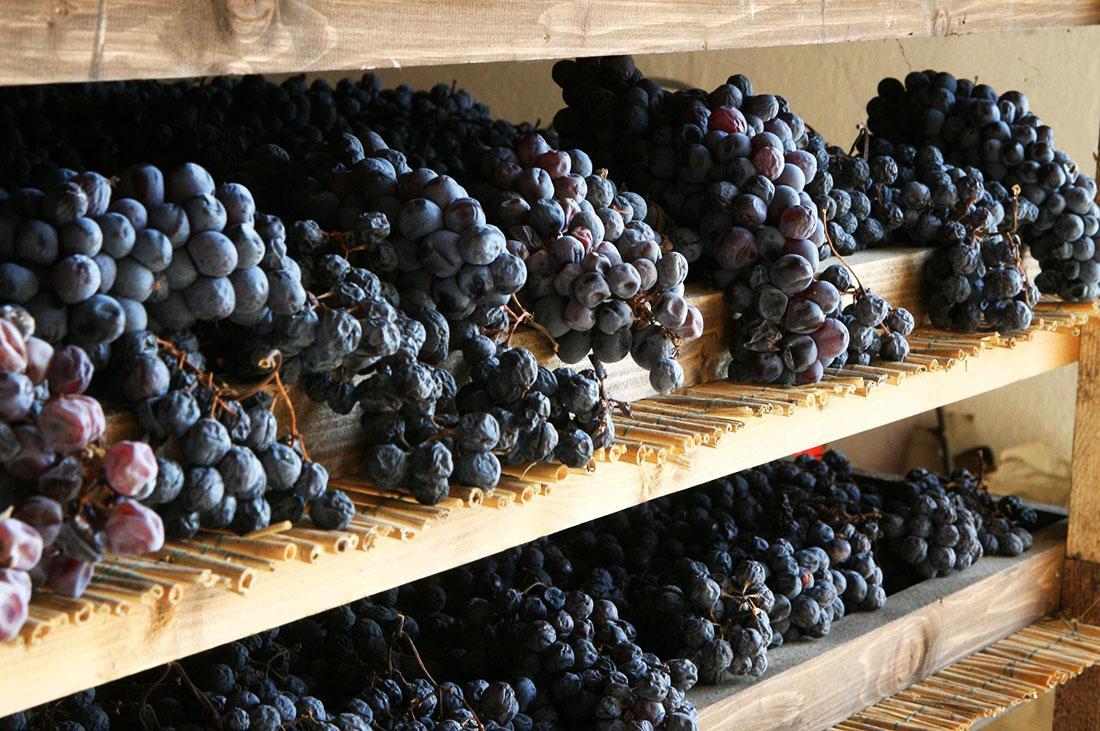 Appasimento Corvina and Corvinone grapes drying in fruttaio