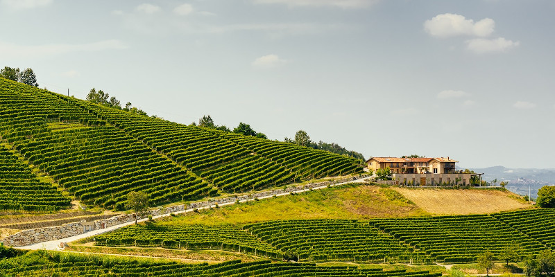 ForteMasso winery Monforte d'Alba