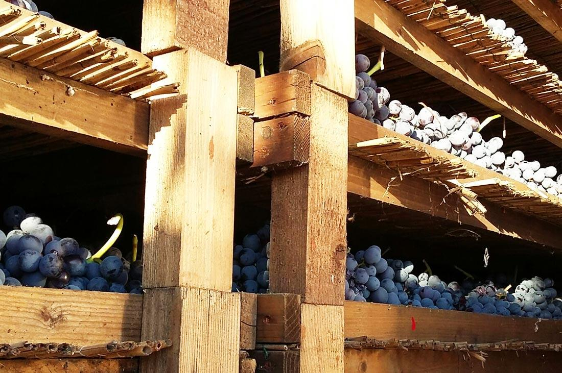 Rubinelli Vajol Corvina grapes drying to produce Amarone wine